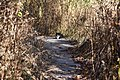 Cat in Mentor Marsh Nature Preserve (22398810506).jpg