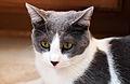 Cat staring towards camera.jpg