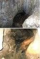 Cave of Monte Grueso (10.3897-subtbiol.30.35420) Figure 3.jpg