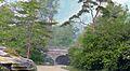 Central Park, NYC – Pius nigra austriaca (5168272860).jpg