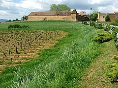 Château de Bagnols vineyard 2.jpg