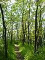 Chemin en bord de Rance à Saint-Suliac - panoramio.jpg