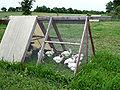 Chickens in tractor organic farm.jpg