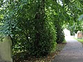 Churchyard path - geograph.org.uk - 981396.jpg