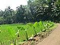 Cipete, Cilongok, Banyumas Regency, Central Java, Indonesia - panoramio (1).jpg
