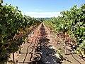 Clos du Val Winery, Napa Valley, California, USA (7218842154).jpg
