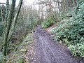 Cocking Tor - Woodland Track - geograph.org.uk - 347426.jpg