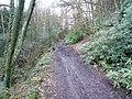 Cocking Tor - Woodland Track - geograph.org.uk - 347426.jpg