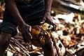 Coconut processing.jpg
