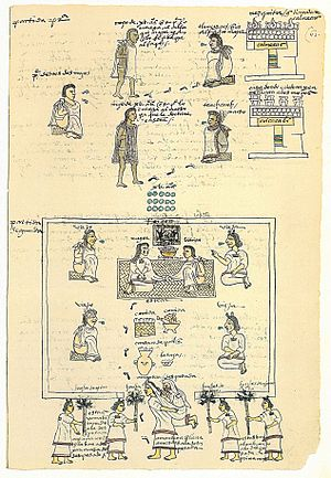 Pulque - Codex Mendoza, an early 16th-century manuscript, showing Aztec elders and pulque in a vessel (lower center)