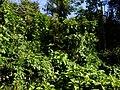 Colina 25-06-2010 - panoramio.jpg