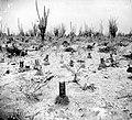 Collectie NMvWereldculturen, TM-10021502, glasnegatief 'Mammillaria (tepelcactussen) op het laagterras bij Bacuna', fotograaf niet bekend, 1930.jpg