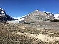 Columbia Glacier Jasper NP 4570.jpg