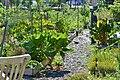 Community Garden Fotor 9 (71236977).jpeg