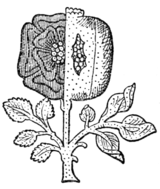 Fig. 679.—Compound Badge of Henry VIII. and Catharine of Aragon. (From the Westminster Tournament Roll.)