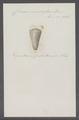 Conus emaciatus - - Print - Iconographia Zoologica - Special Collections University of Amsterdam - UBAINV0274 086 09 0005.tif