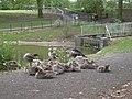 Corby, UK - panoramio (15).jpg