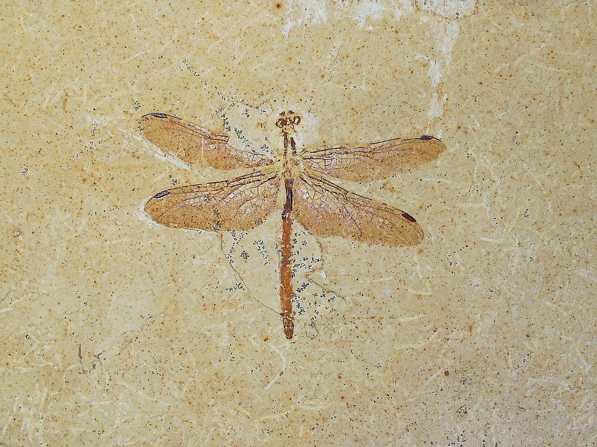 Insectos prehistóricos - Wikipedia, la enciclopedia libre