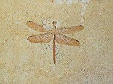 Luranio (dal greco οὐρανός, cielo) è lelemento chimico di numero atomico 92 e il suo.