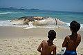 Corpo de baleia encalhada na Praia do Arpoador, no Rio (26663176049).jpg