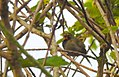 Costa Rica DSCN2714-new (31093411036).jpg
