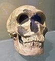Crane Néandertal.JPG