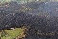 Currant Creek Fire, 6-27 NPS Photo Yasunori Matsu (9160842636).jpg