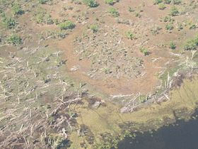 Aerial view of deforestation. Dead trees lay scattered about the ground.