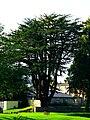 Cypress - panoramio (4).jpg