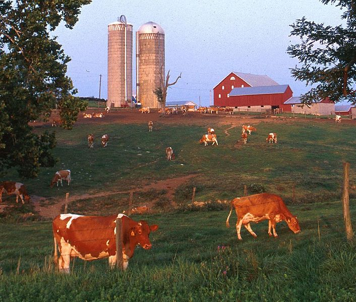 File:DairyCattle.jpg