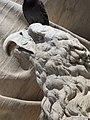 Dante, escultura, Florencia, Italia, 2019 05.jpg