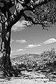 Dartmoor 0810 3596bw (5065334560).jpg