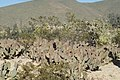 De San Rafael a la Noria de las Animas ,RAMOS ARIZPE COAHILA - panoramio (26).jpg