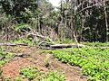 Degradação Florestal Amazônia 27.jpg