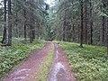 Degučių sen., Lithuania - panoramio (207).jpg