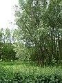 Dense vegetation - geograph.org.uk - 863902.jpg