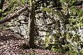 Detmold - 2014-04-13 - Oberer Ochsentalweg (6).jpg