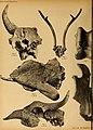 Die Pithecanthropus-Schichten auf Java. Geologische und paläontologische Ergebnisse der Trinil-Expedition (1907 und 1908), ausgeführt mit Unterstützung der Akademischen Jubiläumsstiftung der Stadt (20753827308).jpg