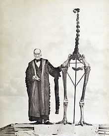 Homme au côté d'un squelette beaucoup plus haut à forme d'autruche