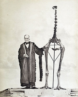 Pleistocene megafauna - Sir Richard Owen and a Dinornis (moa) skeleton