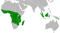 Distribution Macheiramphus alcinus.PNG