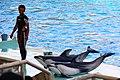 Dolphin show - Nagoya Aquarium - Japan (15678210637).jpg