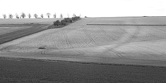 Dorset Cursus - Most of the cursus earthworks have long since been destroyed and its course is only visible as soilmarks when conditions are favourable. Looking southwest from the edge of Salisbury Plantation, the course of the northern bank and ditch is visible as a dark stripe gently meandering down the hillslope (towards the right of this photo). The southern bank is just inside the field boundary (towards the left of the photo).