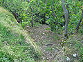 Downhill from Lasnamäe to Pirita.JPG