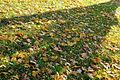 Downsview Dells Park - November 2nd, 2015 (22521954810).jpg