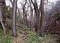 Dry Creekbed - panoramio (1).jpg