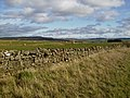 Dry stane dyke and grazing land beside the A68 road - geograph.org.uk - 396788.jpg