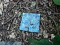 Durex Condom Wrapper in Dartford Heath.jpg