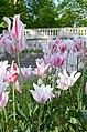 Dutch garden Clingendael 2015 1.JPG
