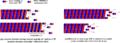 Dynamiczna niestabilność mikrotubul007.PNG